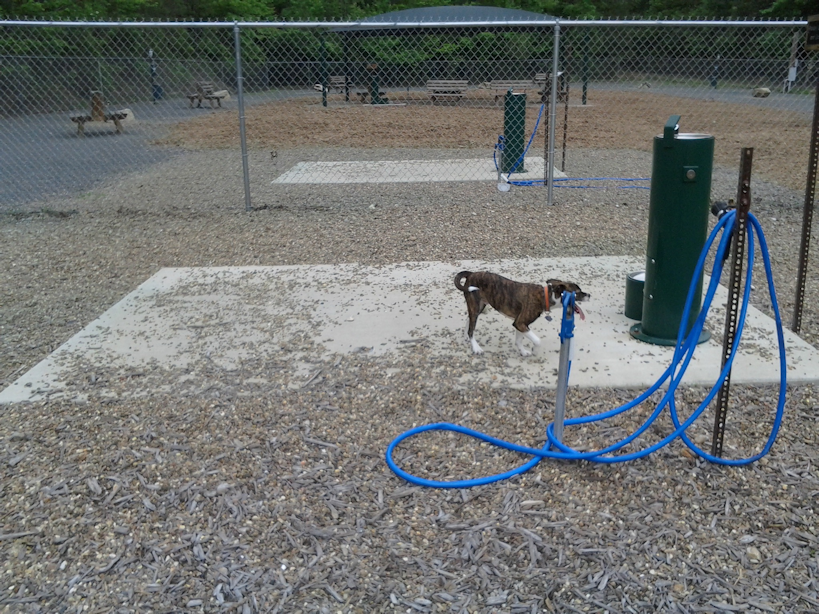 A dog patiently waits to be hosed off after playing hard at HSV DeSoto Dog Park.