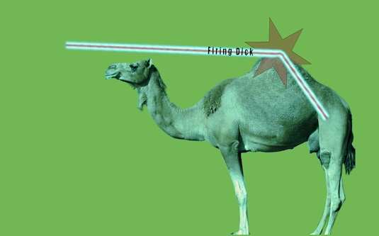 hsvpoa straw breaking camel back