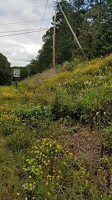 Hot Springs Village black-eyed susan wildflowers planted by Todd Noles